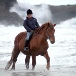 sea horses 01