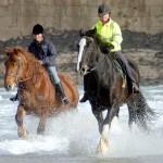 sea horses 02