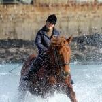 sea horses 03